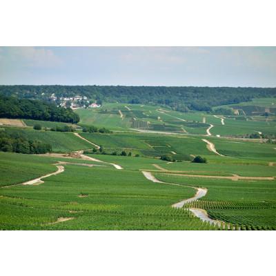 Nádherný pohled na vinice z vinařství Tribault